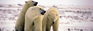 Polar Bear Provincial Park, Ontario