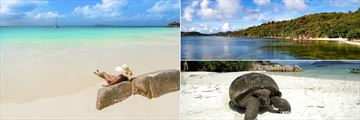 Praslin Island beach, waters and giant tortoise