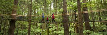 Redwoods tree walk, Rotorua