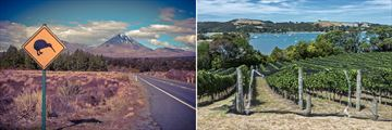 The North Island's Road and Vineyard scenery, New Zealand