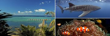 Rotan, Honduras & Marine life sightings