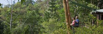 Balcony View of the Rainforest at Rose Gums Wilderness Retreat