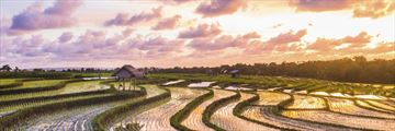 Sunset over rice paddies in Bali