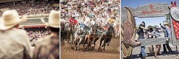 Activities & Fun at the Calgary Stampede