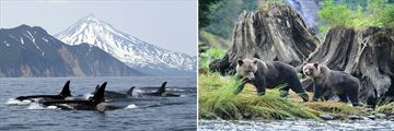 Whale & Bear Sightings in British Columbia, Canada