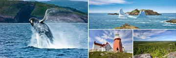 Whale Sightings, Icebergs, Twillingate & Terra Nova National Park