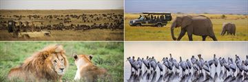 Wildebeeste, Elephants and Lions in the Serengeti & Yellow Billed Storks at Lake Manyara