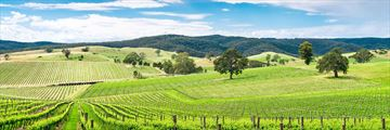 Wine Valley, Barossa