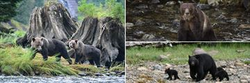 Wonderful bear sightings in BC