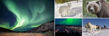 Northern Lights, Wildlife & Dog Sledding Experience in Yukon