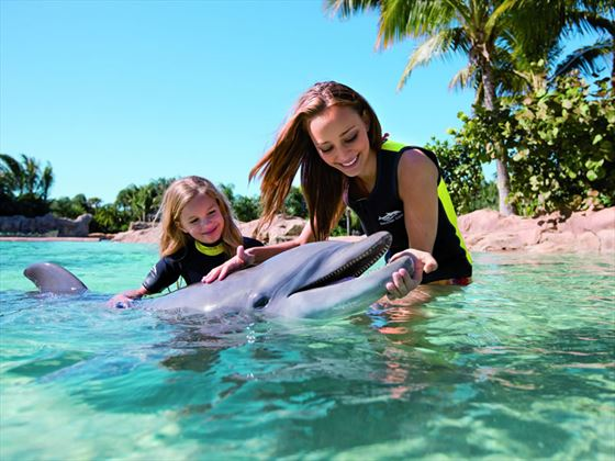 Dolphin interaction, Discovery Cove, International Drive