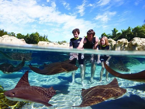 Sting Ray Lagoon at Discovery Cove, Orlando