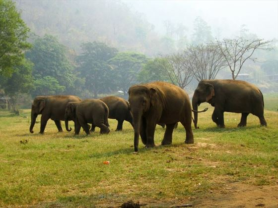 Family Group at Elephant Nature Park, Chiang Mai