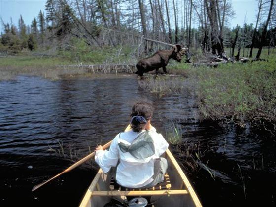 Moose, Ontario