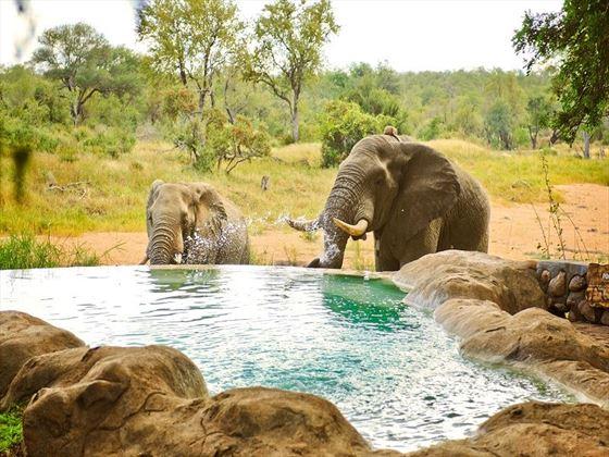 Pool at Motswari Game Lodge