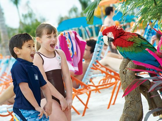 Have a chat with a parrot at SeaWorld, Orlando