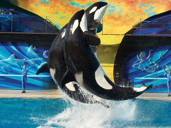 One Ocean whale show at SeaWorld, International Drive