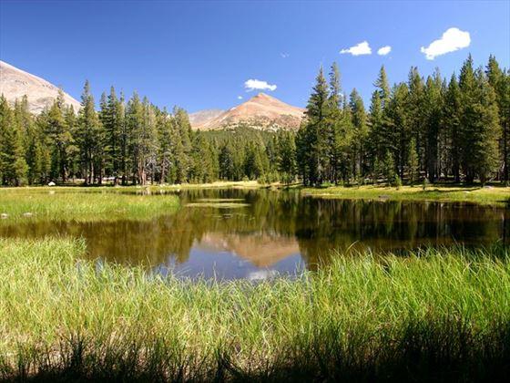 Tioga Pass, Yosemite