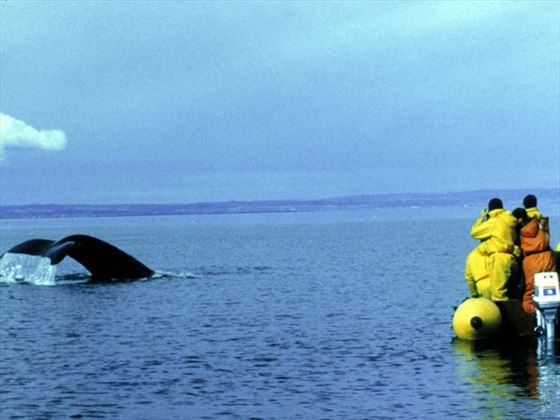 Whale-watching in the St Lawrence Estuary