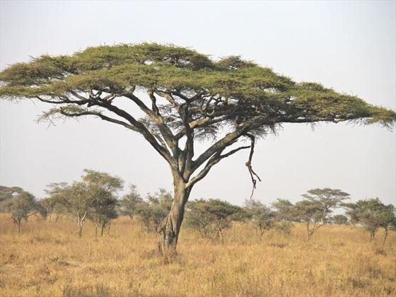 Explore the landscape of the Serengeti National Park