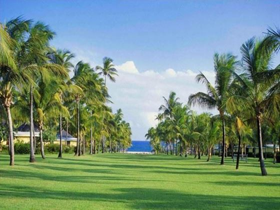 Avenue of the Palms at Nisbet Plantation Beach Resort