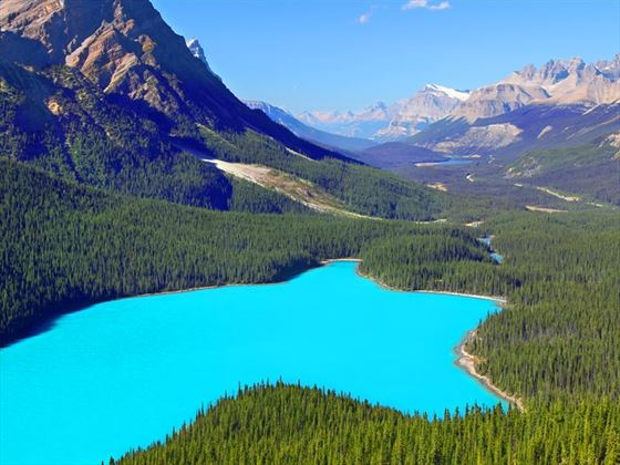 Banff National Park's Peyto Lake