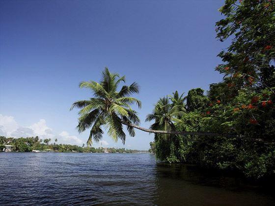 Bentota River and mangrove
