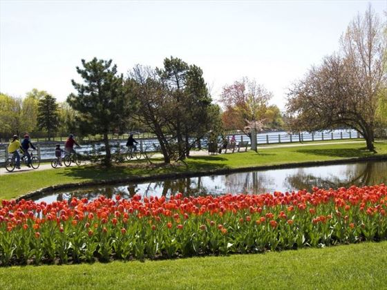Cycling along the Rideau Canal during the Canadian Tulip Festival, Ottawa