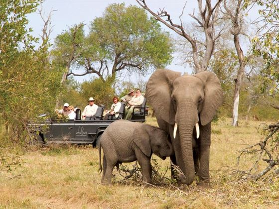 Game drives at Dulini Lodge