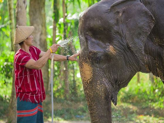 Elephant Experience - Elephant Hills, Khao Sok National Park