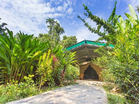 Your luxury tent at Elephant Hills