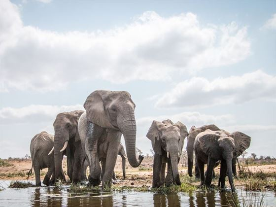 Elephants at the watering hole, Kruger National Park