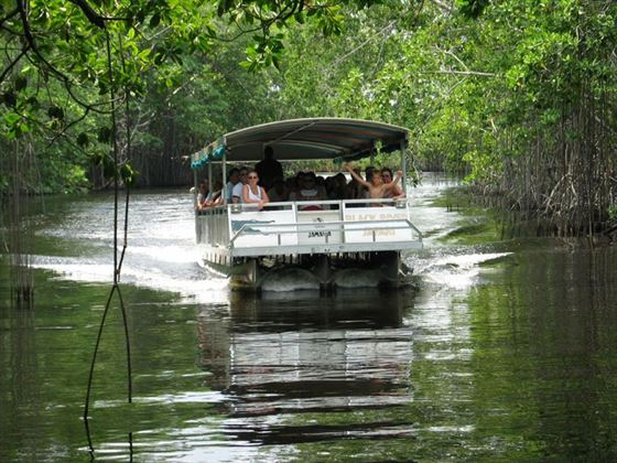 Entering the mangroves on a Black River safari