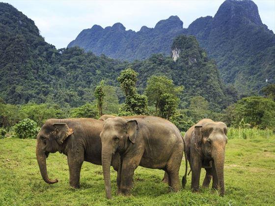 Elephant Hills - ethical elephant experiences