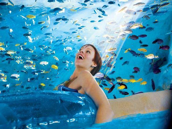 Fish Grotto at Aquatica™
