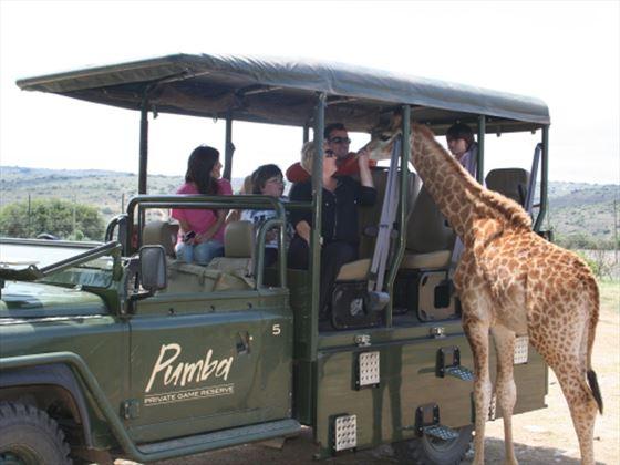 Giraffe at Pumba Private Game Reserve