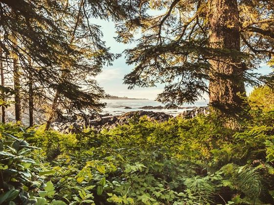 Hiking the Wild Pacific Trail, Vancouver Island