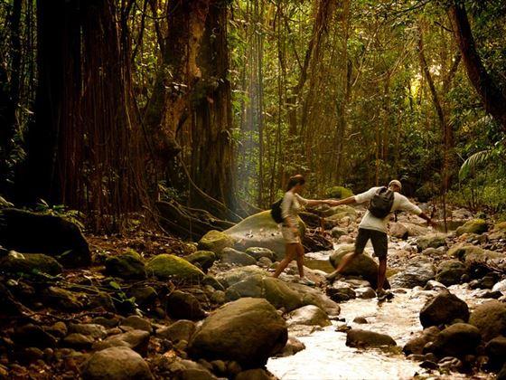 Hiking through the St Kitts rainforest