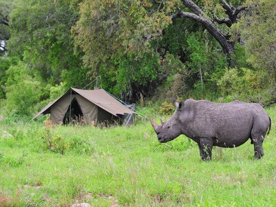 Wildlife sightings at Jock Safari Lodge
