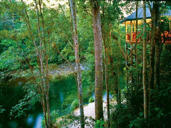 Jungle Perch at Silky Oaks Lodge