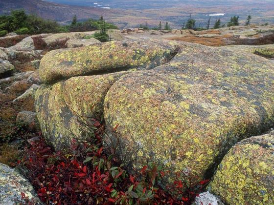Lichen covered boulder of Acadia