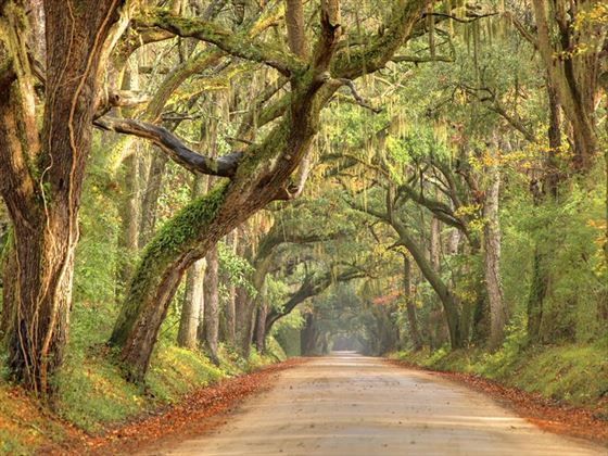 Road through South Carolina's Low Country
