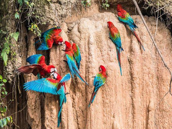 Macaws on the Amazon River