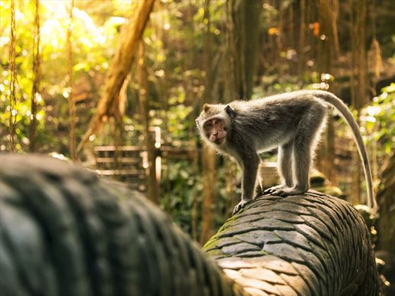 Monkey at the Dragon bridge in Bali's Monkey Forest