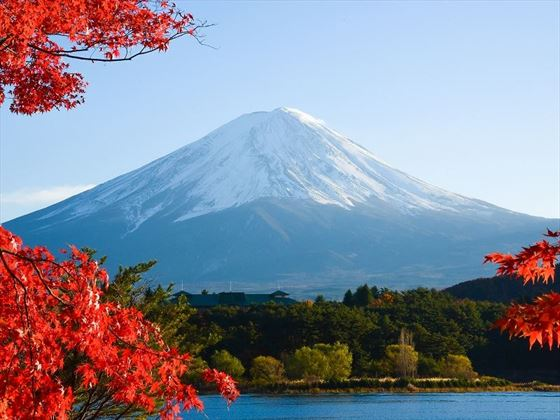 Mount Fiji in Autumn