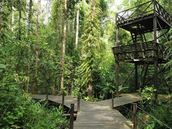 Nature Trail at Abai Jungle Lodge, Borneo