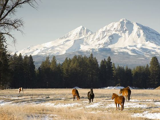 Horses on the ranch in Oregon