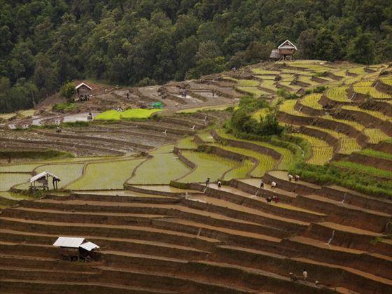 Rice paddies in Longsheng