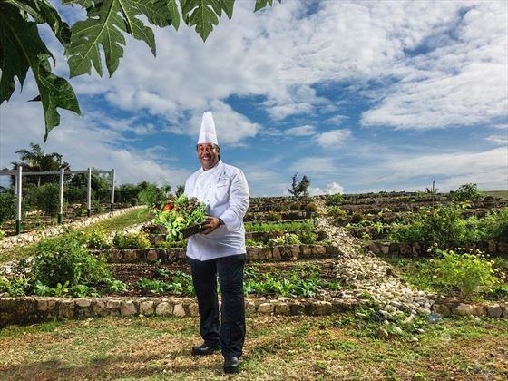 Chef in the organic garden