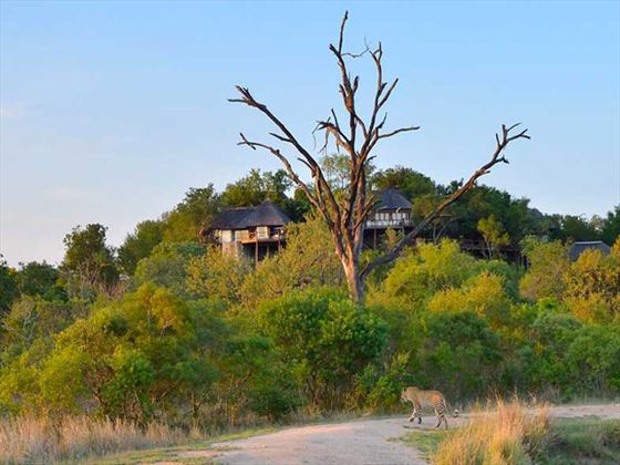 Safari accommodation at Leopard Hills